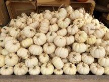 img_9793-white-pumpkin