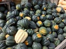 img_9805-green-acorn-squash