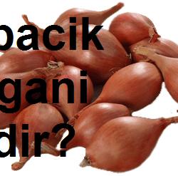 Arpacık Soğanı nedir?