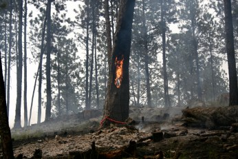 Four Mile Fire, Custer State Park, SD