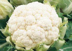 Обычная валерьянка  защита капусты от вредителей