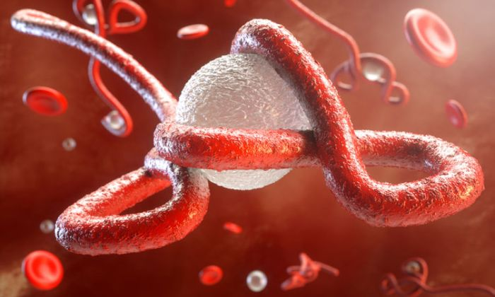 ebola-outbreak-possible-in-nigeria-–-ncdc-reveals