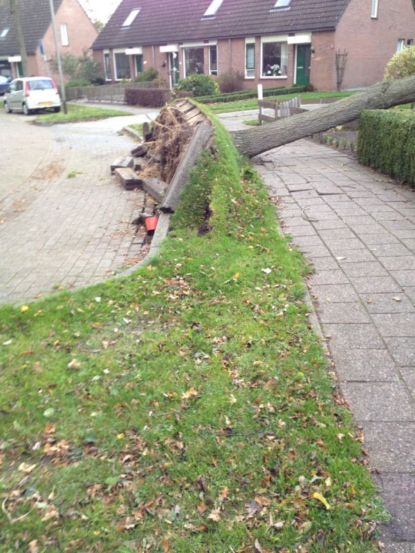 Ontwortelde boom in Vonderpad