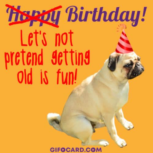 Happy Birthday Dog Gif Free Download Tap To Send Ecard