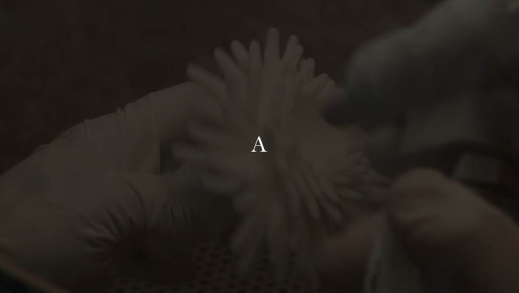 Anemone (2)