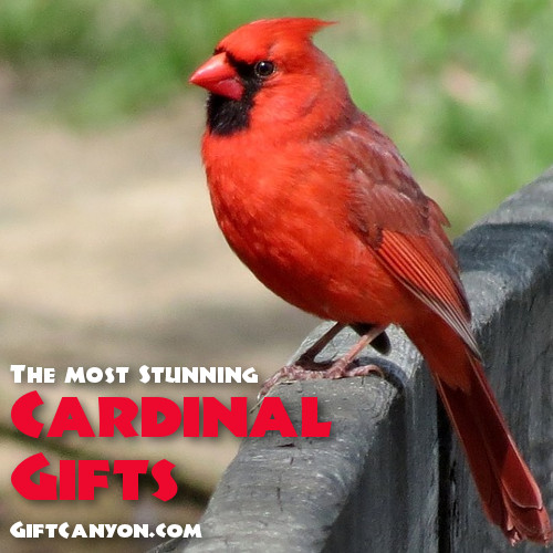 Most Beautiful Cardinal Gifts For Bird Lovers Gift Canyon