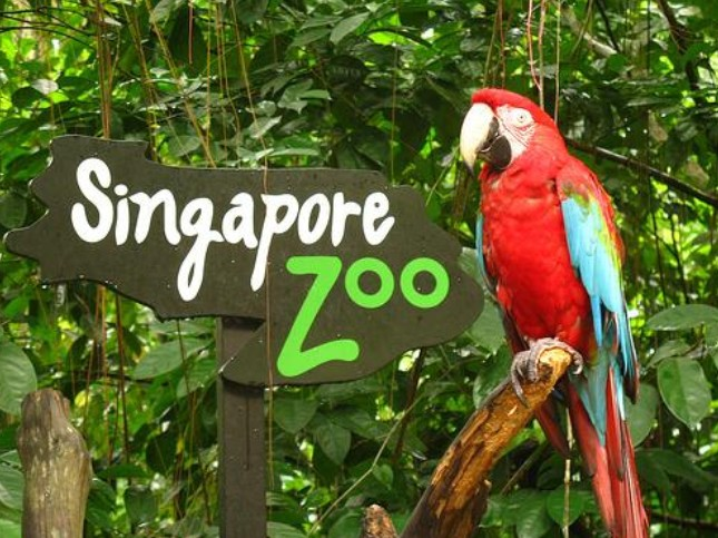 Birthday Special Free Admission to Singapore Zoo