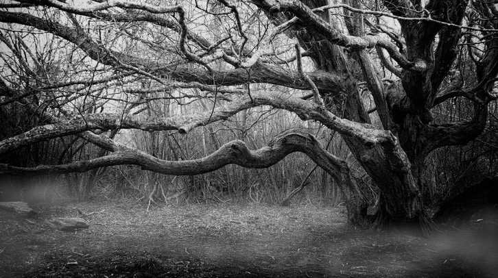 Free Udemy Course on Create Stunning Black & White Images with Nik Silver Efex