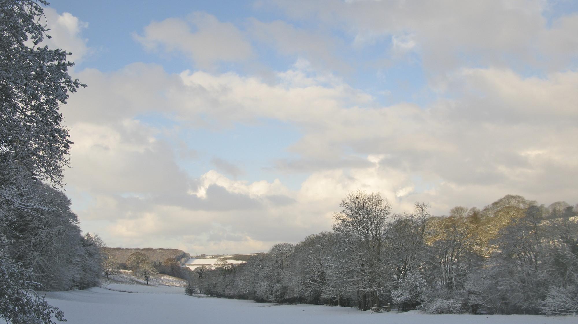 The Buttercup Field In Winter