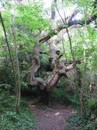 Trees on the Landslip