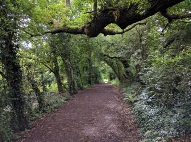 Weeks Road, Swanmore Meadows (Summer)