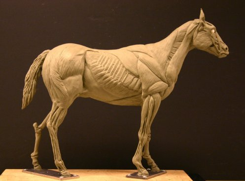 horse_ecorche___day_15_by_aerie_