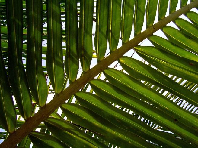 natural leaf shapes