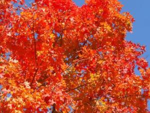 Gott hat es doch wunderbar gemacht... all die Farben die sich verändern...