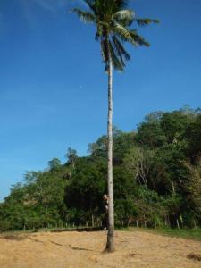 Alexander wollte der Palme hoch...
