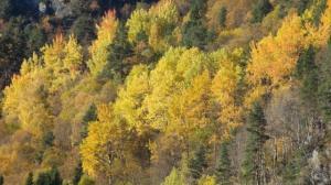 Der Herbst in seiner Pracht...