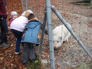 Auch die Schweinchen haben Streicheleinheiten verdient...