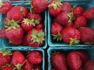 Wir haben viele, viele Erdbeeren gegessen in diesen drei Wochen!