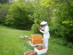 Ein weiterer Sohn der Familie hat Bienen....