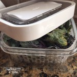 OXO Greensaver storing baby kale