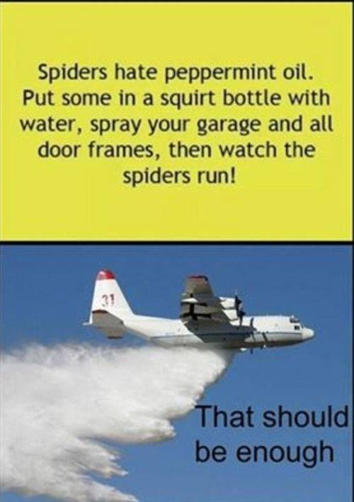 plane-spray-spiders