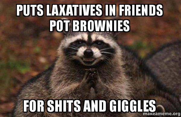 raccoon-shits-and-giggles