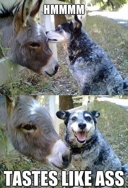 dog-tastes-like-ass