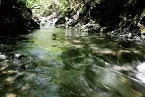 清らかな渓流釣りの風景