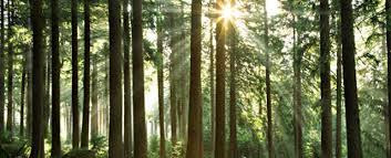 Plantemos árboles socialistas