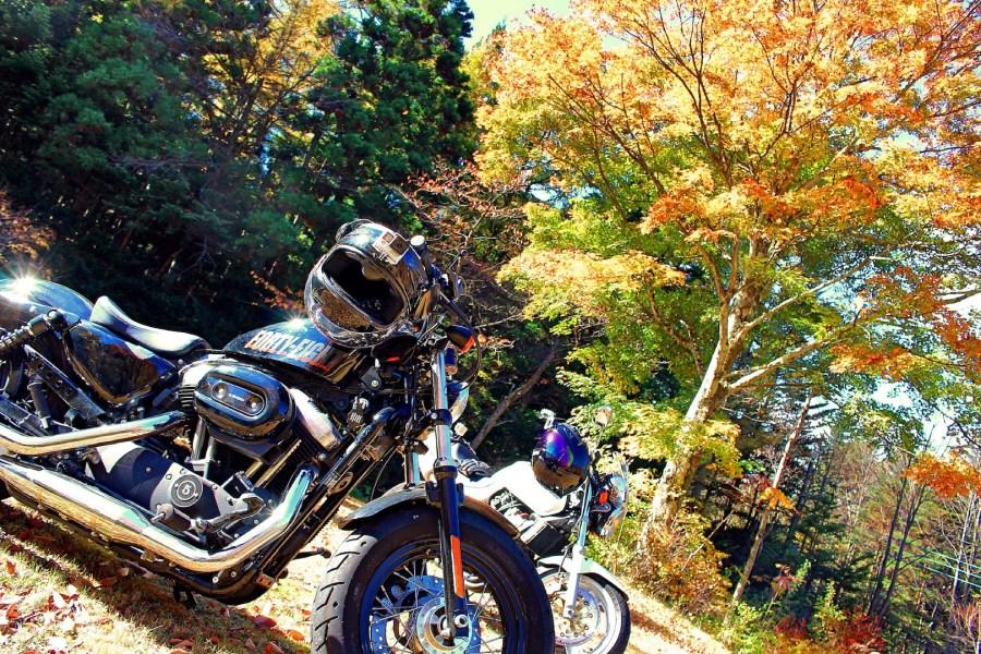 バイクに乗ったほうがいい♬