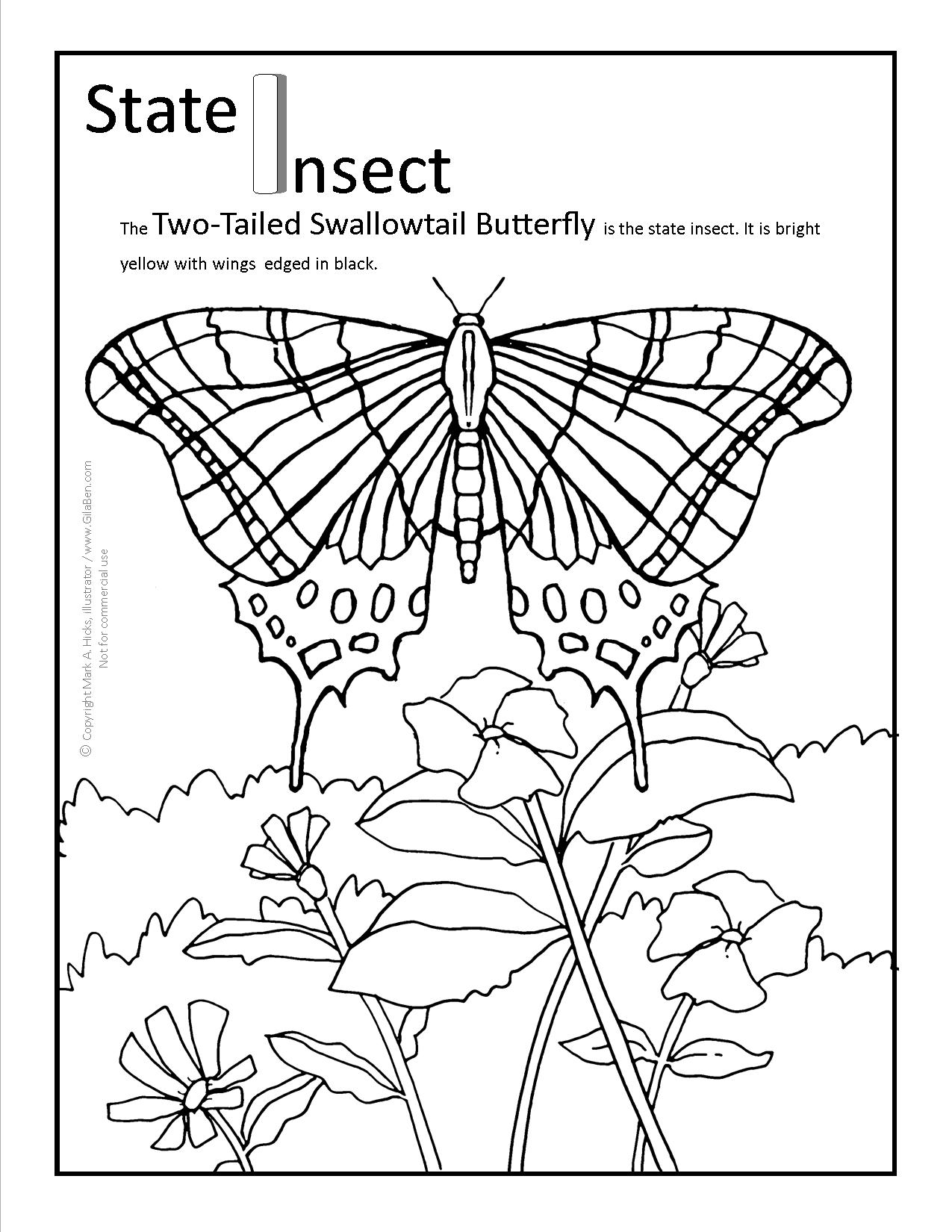 Arizona State Butterfly Coloring Page