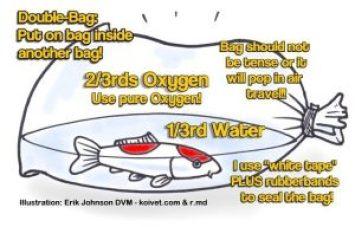 kantong oksigen