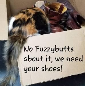 Shoe Drive Fundraiser | Caruthersville Humane Society