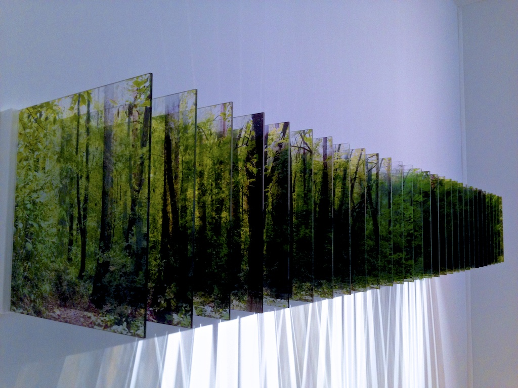 Light of the Forest, de Nobuhiro Nakanishi, Galerie Kashya Hildebrand