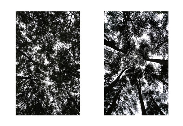 ddays-2016-arbre-eric-gizard-3