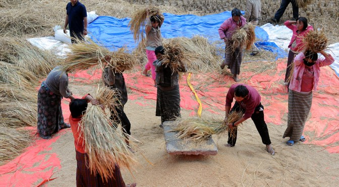 battage du riz au Bhoutan. © Gildas Bellet