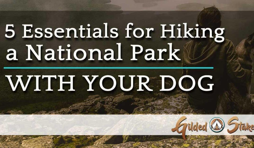 The 5 Essentials for Hiking a National Park with Your Dog