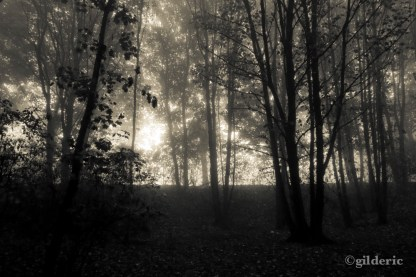 Belgium Witch Project (Liège, Belgique) - Photo : Gilderic