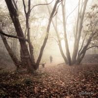 Autumn Fantasy VI : Un dimanche brumeux
