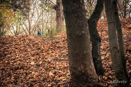Promenade romantique dans les bois (Chartreuse)