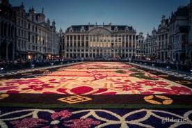 Le Tapis de fleurs de la Grand-Place de Bruxelles