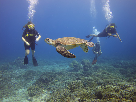 gili-divers-learn-to-dive-2