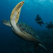 gili-divers-gallery-7