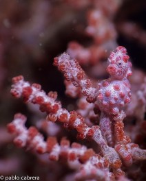 gili-divers-gallery-22
