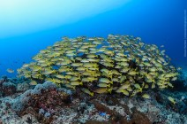 gili-divers-gallery-23