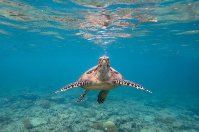 Best Spot Scuba Diving In Lombok For Nice Holiday - Gili ...
