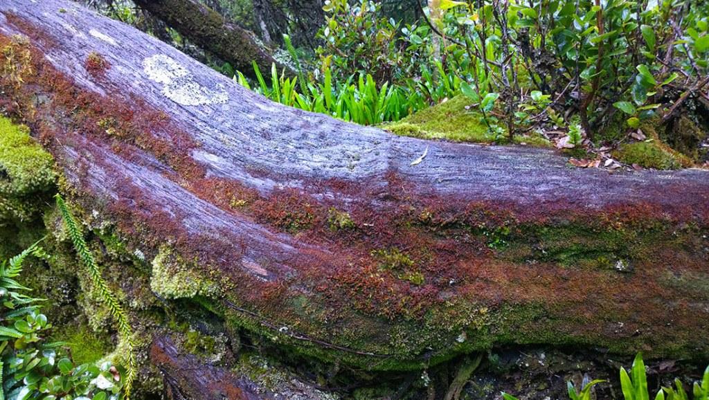 lichens-jms