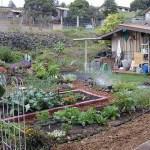 Our Old Garden & Original Pond