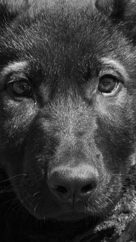 lux joy pup 2