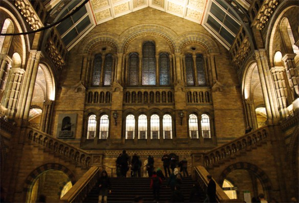 Steps, Natural History Museum